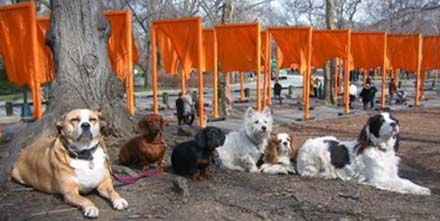 Central Park Dogs